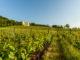 Blick über die Weinberge Edenkoben